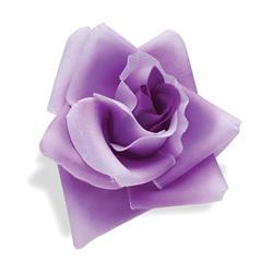 Electra Lenkerblume Rose, Lila